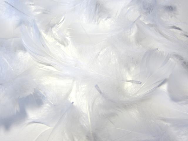 羽毛のイメージ